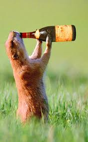 beer gopher