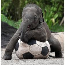 elephootball