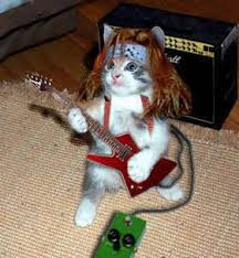 rocking kitty