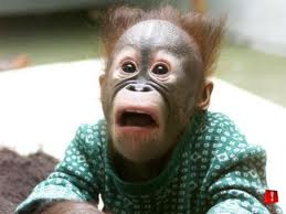 shocked ape