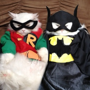 Bat Kitties think you guys are adorable