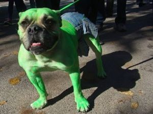 Hulk Mutt just left you a stinky surprise in your yard