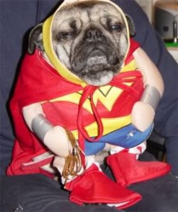 Wonderpug is not impressed.