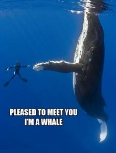 whaleday