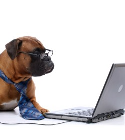work like a dog