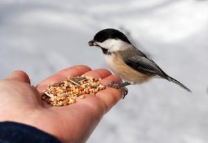 bird feeding2