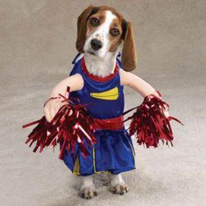 dress up pet