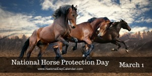 National-Horse-Protection-Day-March-1-1024x512