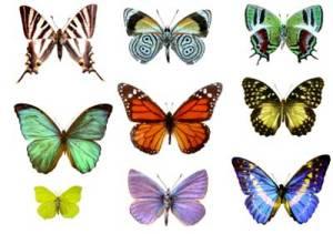butterfly-color-butterflies