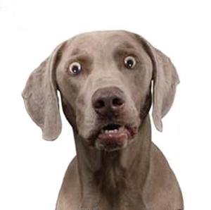 dumbstruck-dog