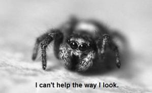 save spider