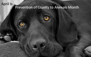 Cruelty-Prevention-graphic