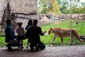 H_lion-family-kids-visitors