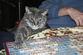 scrabblecat