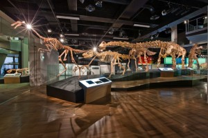 MM---Science-Life-melbourne museum