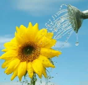 watering-can-flower-3