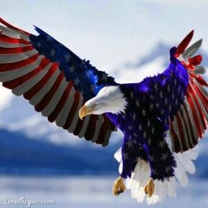 18437-American-Eagle