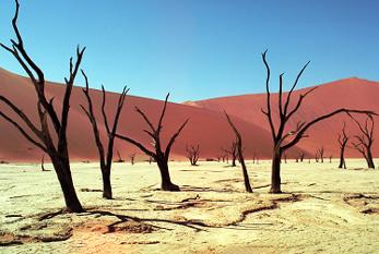 day-to-combat-desertificati