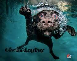 swim a lap