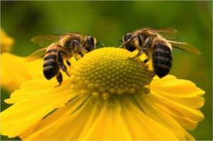 bees_750_496_70_s