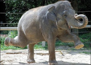 funny-cute-elephant