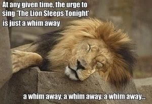 Funny-Sleeping-Lion