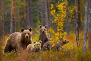 Wildlife-Photos14
