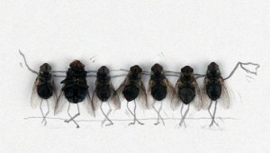 amazing-flies3