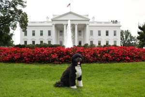 bo-obama-white-house-washington