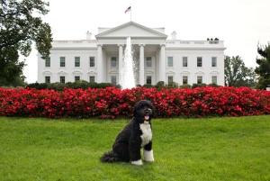 bo-obama-white-house-washington