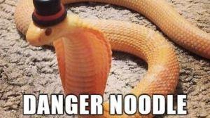 danger-noodle