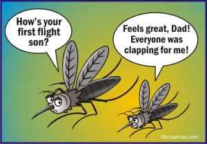 mosquito1stflightclap