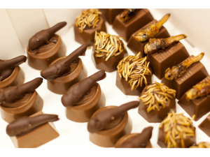 12_-_mealworm_and_locust_pralines-600x450
