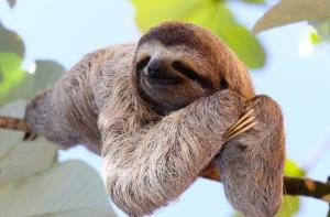 international-sloth-day