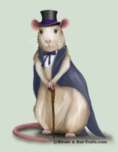 fancy-rat