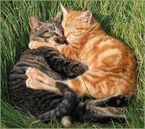 cuddle-up