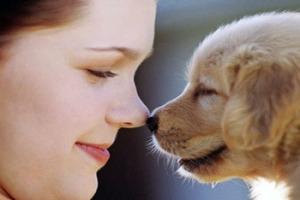 love-your-pet